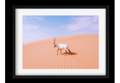 Arabian Onyx
