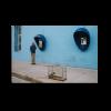 blue Bird - Hans van Leeuwen
